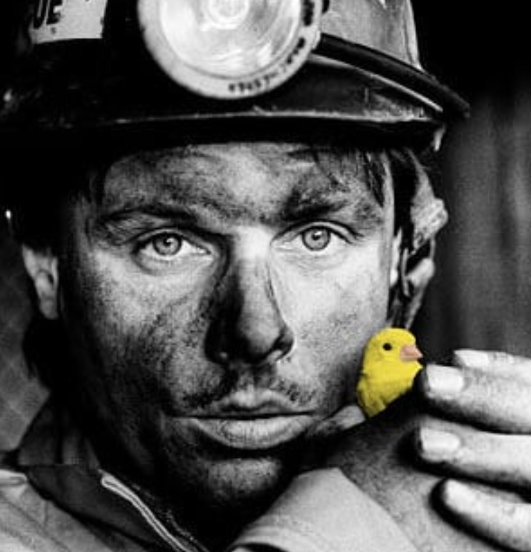 Last canary to work down a British coal mine (c) Philip Dunn/Mary Evans Picture Library